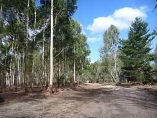 blackwood 3