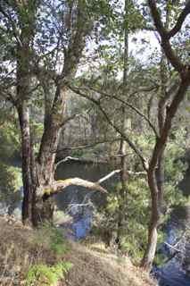 blackwood 5