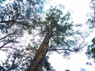 clim tree 4