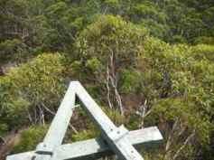 clm tree2
