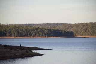 Wellington Dam Collie