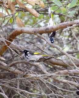 lucky bay birds