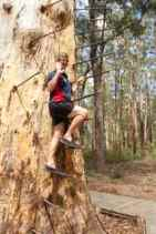 tree cl2
