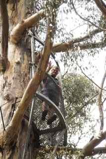 tree cl4