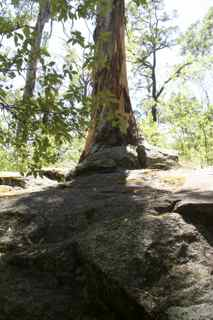 tree in rock 5