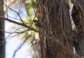 tree in rock bird 3
