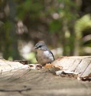 tree in rock bird 6