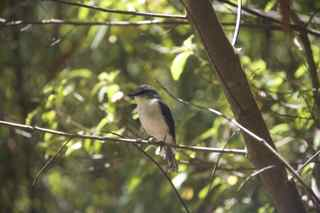 tree in rock bird