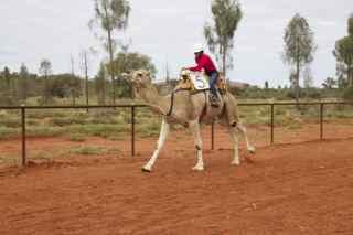 ayes rock camel r 7
