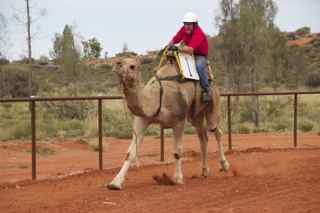 ayes rock camels r