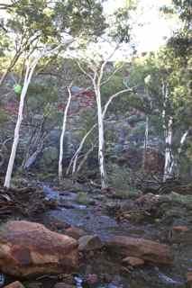 king canyon 7