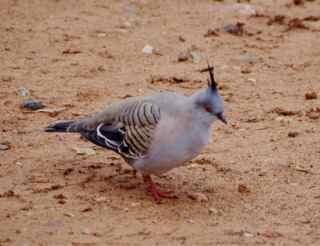 port augusta bird