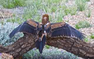 alice bird show 6