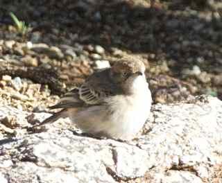 alice birds 13