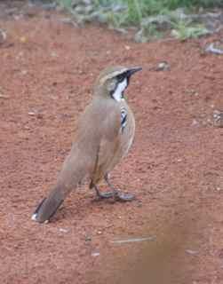 alice birds 4