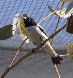 alice birds 5