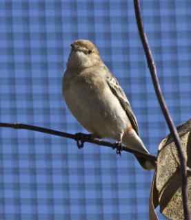 alice birds 6
