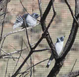 alice birds 7
