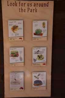 alice boards 2