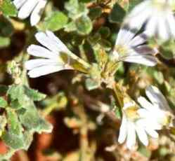 alice flowers 2