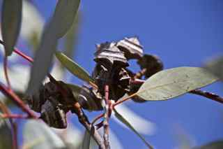 alice plants 1