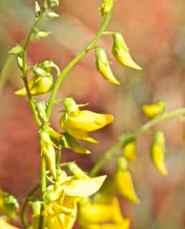alice plants 3
