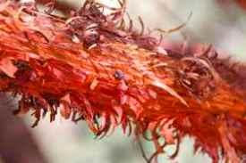 alice plants 5