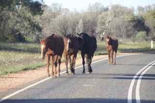 ellery horses 1