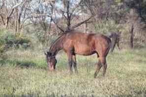 ellery horses 2