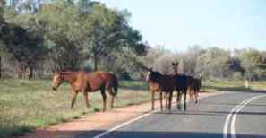 ellery horses