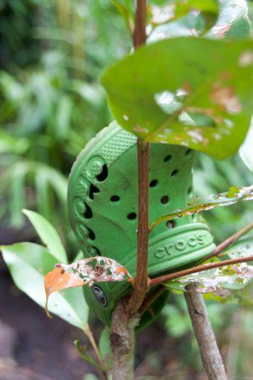 lich-croc-1