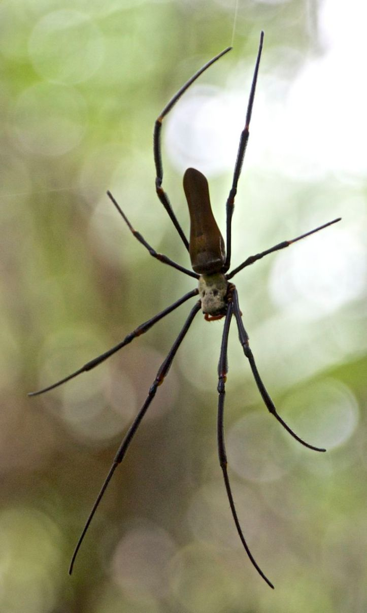 lich-spider