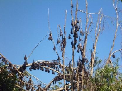 longreach-bates1