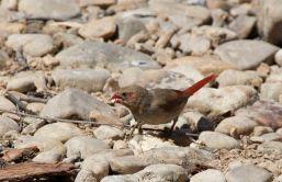 greg-bird-a