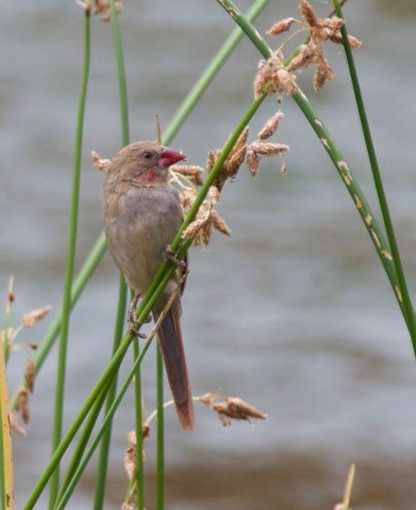 greg-bird