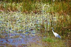 kak-wetlands-1