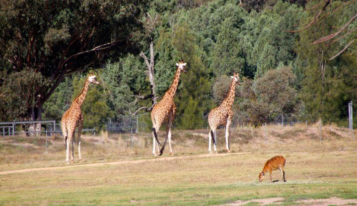 zoo 15
