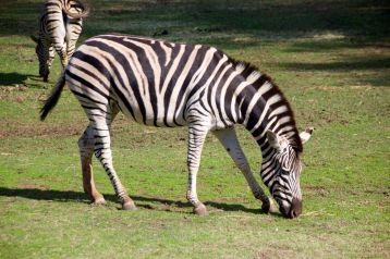 zoo 27
