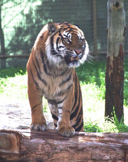 zoo 29