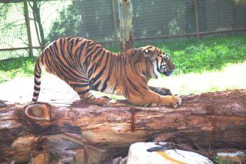 zoo 31