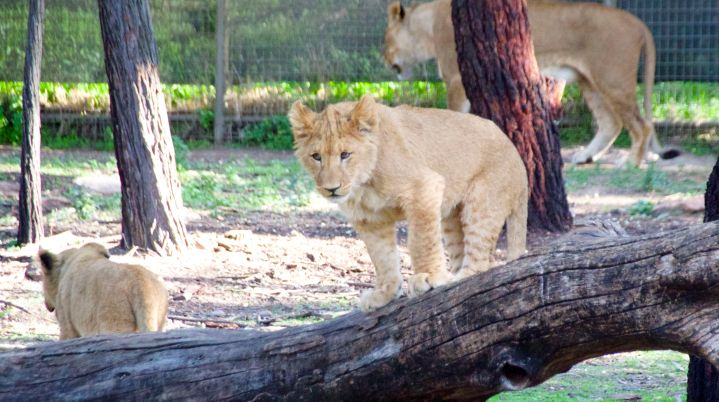 zoo 35