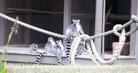 zoo 41