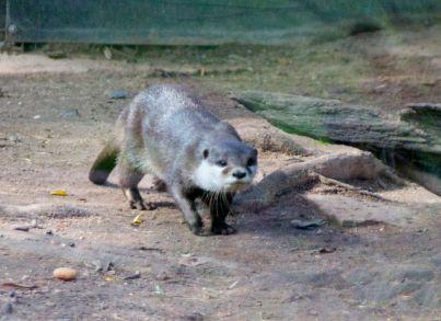 zoo 61