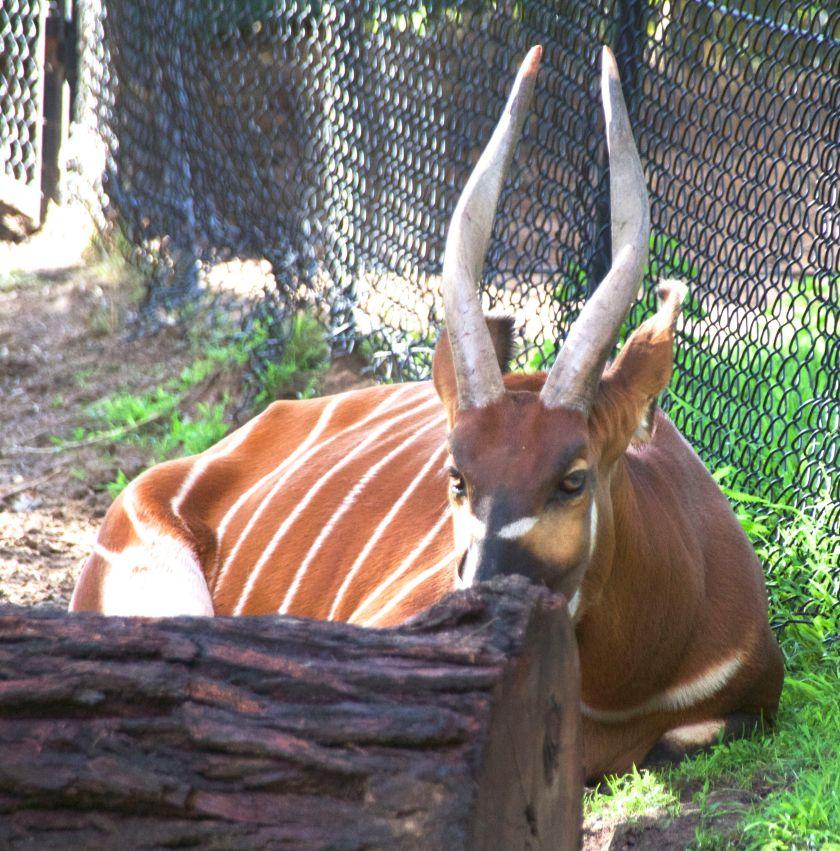 zoo 67